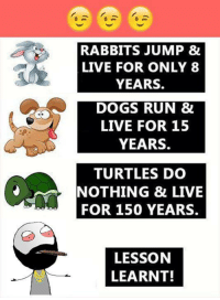 dog run: RABBITS JUMP &  LIVE FOR ONLY 8  YEARS.  DOGS RUN &  LIVE FOR 15  YEARS.  TURTLES DO  NOTHING & LIVE  FOR 150 YEARS.  LESSON  LEARNT!