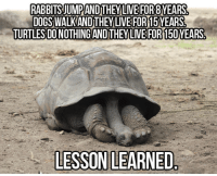 Dogs, Live, and They Live: RABBITS JUMPANDTHEY LIVE FOR8YEARS  DOGS WALKAND THEY LIVE FOR15YEARS  TURTLES DONOTHING ANDTHEYLIVE FOR 150YEARS  LESSON LEARNED Lesson Learned