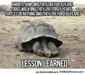 Dogs, Tumblr, and Blog: RABBITSJUMPANDTHEY LIVEFOR8YEARS  DOGS WALKANDTHEYLIVE FOR15 YEARS  TURTLES DO NOTHING ANDTHEYLIVEFOR150 YEARS  LESSON!LEARNED  you should probably go to TheMetaPicture.com srsfunny:An Important Lesson We Should Learn From Turtles