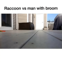 Raccoon, Dank Memes, and Man: Raccoon vs man with broom Did you ever had to confront a raccoon? 😂👇 @h0odvine_