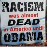 Memes, 🤖, and In America: RACISM  was almost  DEAD  in America until Freaking dirtbag.