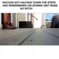 Daquan, Funny, and Step: RACOON GOT HALFWAY DOWN THE STEPS  AND REMEMBERED HIS MOMMA AINT RAISE  NO BITCH  IG:@Daquan 0-100 😂😂😂