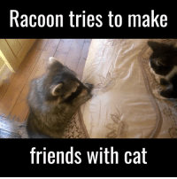 """Dank, 🤖, and Cat: Racoon tries to make  friends with cat """"You WILL be my friend.""""   Credit: ViralHog"""