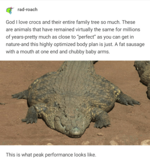 "Peak Performance: rad-roach  God I love crocs and their entire family tree so much. These  are animals that have remained virtually the same for millions  of years-pretty much as close to ""perfect"" as you can get in  nature-and this highly optimized body plan is just. A fat sausage  with a mouth at one end and chubby baby arms.  This is what peak performance looks like. Peak Performance"