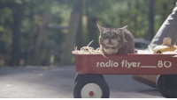 What are you thankful for today?  Let's start with this adorable video of Lil Bub..: radio flyer  8O What are you thankful for today?  Let's start with this adorable video of Lil Bub..