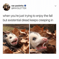 🍂😫🍂😝🍂: rae paoletta  @PAYOLETTER  when you're just trying to enjoy the fall  but existential dread keeps creeping in 🍂😫🍂😝🍂
