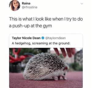 memes: Raina  @rfrostine  This is what I look like when I try to do  a push-up at the gym  Taylor Nicole Dean  @taylorndean  A hedgehog, screaming at the ground: memes
