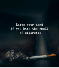 Smell, Cigarette, and You: Raise your hand  if you hate the smell  of cigarette