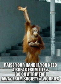 Funny, Life, and Memes: RAISE YOUR HAND IFYOU NEED  A BREAK FROM LIFE&  GOON A TRIP FAR  AWAY FROMSOCIETY &WORRIES Top 60 Funny Memes And Hilarious Sayings 50