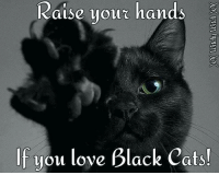 Raise Your Hands: Raise your hands  If you love Black Cats!