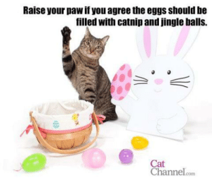 jingle balls: Raise your paw if you agree the eggs should be  filled with catnip and jingle balls.  Cat  Channelcom