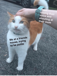 Meirl: raising their  voice and  shouting at  their mum  Me at a friends  house, trying  to be polite Meirl