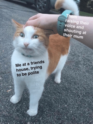 Meirl by stonedbrownie FOLLOW HERE 4 MORE MEMES.: raising their  voice and  shouting at  their mum  Me at a friends  house, trying  to be polite Meirl by stonedbrownie FOLLOW HERE 4 MORE MEMES.
