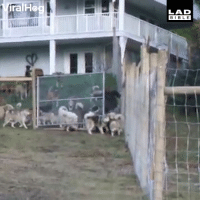 Man adopts 45 dogs and lets them loose on his 4 acre land...: ralHo  LAD  BIBLE Man adopts 45 dogs and lets them loose on his 4 acre land...