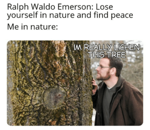Lose Yourself, Reddit, and Nature: Ralph Waldo Emerson: Lose  yourself in nature and find peace  Me in nature:  M REALLY LICHEN  THIS TREE Wheres Waldo