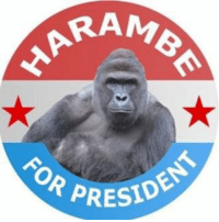 Get out and vote tonight harambeforpresident: RAM  OR PRESIDE Get out and vote tonight harambeforpresident