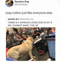 Funny, Harsh, and Spooky: Random Dog  @lnthat8am  I pay tuition just like everyone else  spooky lex @spoooky_lex  THERE IS A RANDOM LOOSE DOG IN MY 8  AM I CANNOT MAKE THIS UP He's just trying to learn people quit being so harsh!
