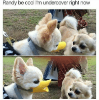 Randi: Randy be cool lim undercover right now