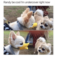 @animal.humor is the best animal account on instagram 😩😍: Randy be cool lim undercover right now @animal.humor is the best animal account on instagram 😩😍
