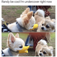 Duck off! @confessionsofablonde goodgirlwithbadthoughts 💅🏼: Randy be cool l'm undercover right now Duck off! @confessionsofablonde goodgirlwithbadthoughts 💅🏼