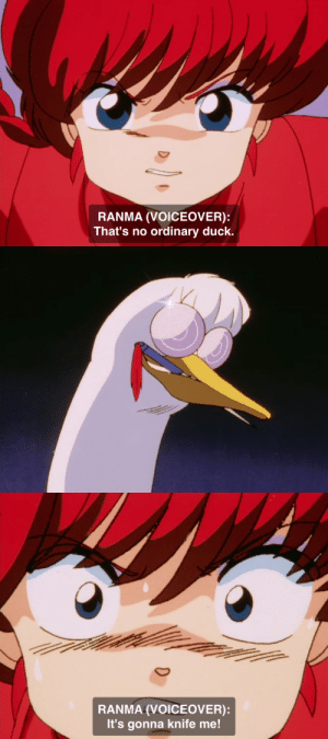 Its Gonna: RANMA (VOICEOVER):  That's no ordinary duck.   RANMA (VOICEOVER):  It's gonna knife me!