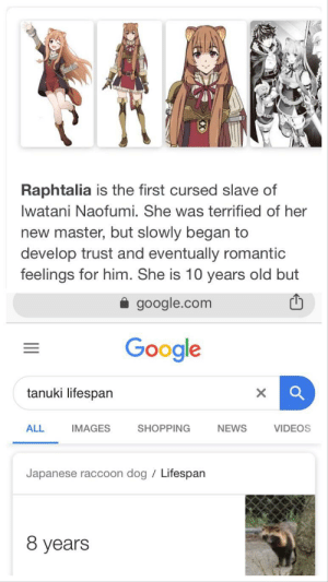 Anime, Confused, and Google: Raphtalia is the first cursed slave of  Iwatani Naofumi. She was terrified of her  new master, but slowly began to  develop trust and eventually romantic  feelings for him. She is 10 years old but  google.com  Google  tanuki lifespan  X  ALL  IMAGES  SHOPPING  NEWS  VIDEOS  Japanese raccoon dog Lifespan  8 years *confused screaming*