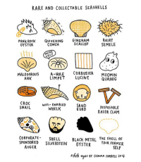 🐚 Some shells to look out for on your next beach trip 🏖 comics: RARE AND COLLECTABLE SEASHELLS  PUNK ROCK QUIVERING GINGHAM  CONCH  HAIRY  SEMELE  OYSTER  SCALLOP  MALODOROUS  ARK  A-HOLE CORBUSIER MOOMIN  LIMPET LUCINE  QUAHOG  CROC  SNAIL  WIFI ENABLED  WHELK  SAND  EURO  DISPOSABLE  RAZOR CLAM  CORPORATESHELL  SPONSORED SILVERSTEIN OYSTER  BLACK METAL THE SHELL oF  YOUR FORMER  AUGER  SELF  FdR yes BY GEMMA CORRELL 20 🐚 Some shells to look out for on your next beach trip 🏖 comics