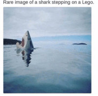 Rare Image Of A Shark Stepping On A Lego