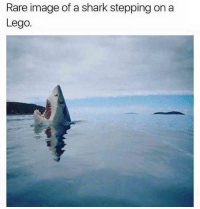 Dank, Lego, and Shark: Rare image of a shark stepping on a  Lego.