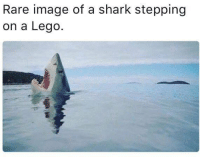 All parents can relate to this.  ~~ Sister Patriot: Rare image of a shark stepping  on a Lego. All parents can relate to this.  ~~ Sister Patriot