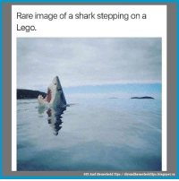 I Know The Feeling!!! https://t.co/ZM2ULtYV7c #smiles #funnypictures #funny #lmao https://t.co/kYIDJHR8DE: Rare image of a shark stepping on a  Lego.  DIY And Household Tips diyandhouseholdtips.blogspot.ca I Know The Feeling!!! https://t.co/ZM2ULtYV7c #smiles #funnypictures #funny #lmao https://t.co/kYIDJHR8DE