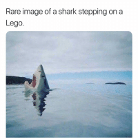 Lego, Memes, and Shark: Rare image of a shark stepping on a  Lego Good Morning 💞 Double tap❤️