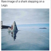 Lego, Shark, and Image: Rare image of a shark stepping on a  Lego. https://t.co/UrPjSsm8HH