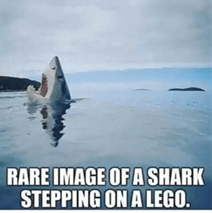 LEGO memes: RARE IMAGE OF A SHARK  STEPPING ON A LEGO. LEGO memes