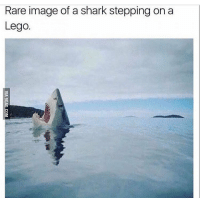 Dank, Memes, and Shark: Rare image of a shark stepping on a  Lego. Lmao 👊🏻TAG your HOMIES👊🏻 - Credit: @9gag Like for good luck ignore for bad luck - 👌🏼check out my youtube - in bio - Partner- @rize.xnuclear My backup- @memes_are_mee.2 My clan- @rize_above.all - Support appreciated😉 👌🏼 Tags 🚫 IGNORE 🚫 420 memesdaily Relatable dank Memes HoodJokes Hilarious Comedy HoodHumor ZeroChill Jokes Funny KanyeWest KimKardashian litasf KylieJenner JustinBieber Squad Crazy Omg Accurate Kardashians Epic bieber Weed TagSomeone memesaremee trump rap drake