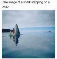 Lol (^^^)  Show us some funnies! ;)  Please keep it PG-13 and absolutely NO shaming.   XOXO  <3 Helen: Rare image of a shark stepping on a  Lego. Lol (^^^)  Show us some funnies! ;)  Please keep it PG-13 and absolutely NO shaming.   XOXO  <3 Helen