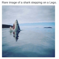 Rare image of a shark stepping on a Lego. me irl