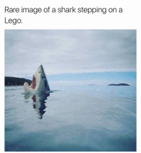Rare image of a shark stepping on a  Lego RIP