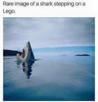 Lego, Memes, and Shark: Rare image of a shark stepping on a  Lego. The most painful thing!