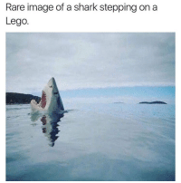 What did you think atlantis was made out of @shitheadsteve: Rare image of a shark stepping on a  Lego. What did you think atlantis was made out of @shitheadsteve