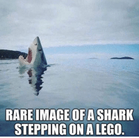 Lego, Shark, and Image: RARE IMAGE OFA SHARK  STEPPINGON A LEGO Haha.