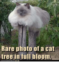 Grumpy Cat, Cat, and Photos: Rare photo of a cat  tree in full bloom. :-)