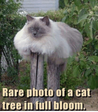 Grumpy Cat, Cat, and Photos: Rare photo of a cat  tree in full bloom.