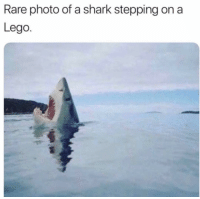 Funny, Lego, and Lol: Rare photo of a shark stepping on a  Lego. Rare pic lol