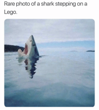 Lego, Memes, and Shark: Rare photo of a shark stepping on a  Lego. Story of my childhood