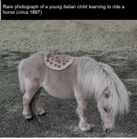 History is pretty neat if you think about it: Rare photograph of a young italian child learning to ride a  horse (circa 1897) History is pretty neat if you think about it