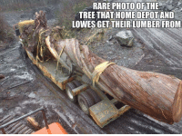 Now I understand!: RARE PHOTOOFTHE  HOME DEPOT  TREE-THAT AND  LOWES GET THEIRLUMBER FROM Now I understand!