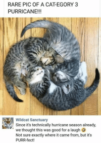Memes, Good, and Hurricane: RARE PIC OF A CAT-EGORY 3  PURRICANE!!!  Wildcat Sanctuary  Since it's technically hurricane season already,  we thought this was good for a laugh  Not sure exactly where it came from, but it's  PURR-fect!