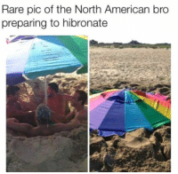 "Club, Tumblr, and American: Rare pic of the North American bro  preparing to hibronate <p><a href=""http://laughoutloud-club.tumblr.com/post/166081528831/bruhh"" class=""tumblr_blog"">laughoutloud-club</a>:</p>  <blockquote><p>Bruhh</p></blockquote>"