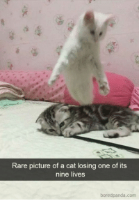 Cartoons, Cat, and Com: Rare picture of a cat losing one of its  nine lives  boredpanda.com It doesnt only happen in cartoons !!